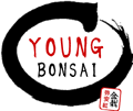 Young Bonsai