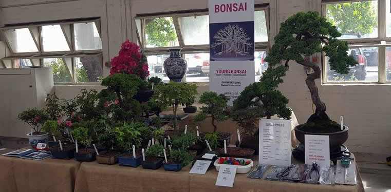 young bonsai canberra markets